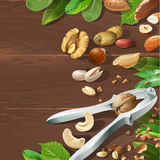 Vector illustration of nutcracker and nuts Stock Photos