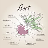 Vector illustration of nutrient list for beet Royalty Free Stock Image