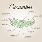 Vector illustration of nutrient list for cucumber Royalty Free Stock Photos