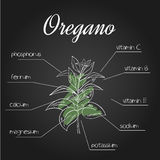 Vector illustration of nutrient list for oregano Stock Photo