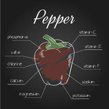Vector illustration of nutrient list for pepper Royalty Free Stock Photos