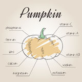 Vector illustration of nutrient list for pumpkin Stock Images