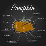 Vector illustration of nutrient list for pumpkin Royalty Free Stock Images