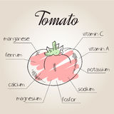 Vector illustration of nutrient list for tomato Royalty Free Stock Photos