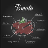 Vector illustration of nutrient list for tomato Stock Image