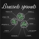 Vector illustration of nutrients list for brussels sprouts on chalkboard backdrop.  Royalty Free Stock Photo