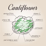 Vector illustration of nutrients list for cauliflower Royalty Free Stock Photos
