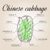 Vector illustration of nutrients list for chinese cabbage Royalty Free Stock Photography