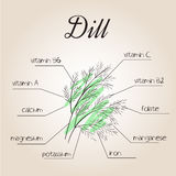 Vector illustration of nutrients list for dill.  Stock Photo