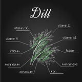 Vector illustration of nutrients list for dill on chalkboard backdrop.  Stock Photos