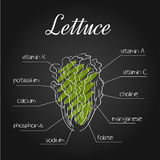 Vector illustration of nutrients list for  lettucce on chalkboard backdrop.  Stock Photography