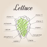 Vector illustration of nutrients list for lettuce.  Royalty Free Stock Image