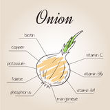 Vector illustration of nutrients list for onion.  Stock Images