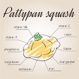 Vector illustration of nutrients list for pattypan squash Stock Photo