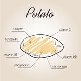 Vector illustration of nutrients list for potato.  Royalty Free Stock Photography