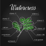 Vector illustration of nutrients list for  watercress on chalkboard backdrop.  Royalty Free Stock Photography