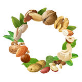 Vector illustration of nuts Stock Photography