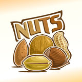 Vector illustration of nuts Royalty Free Stock Photography