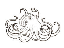 Vector illustration of octopus line art style. Design for t-shirt, posters. Stock Photography