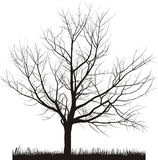 Vector Illustration Of Cherry Tree In Winter Royalty Free Stock Image