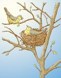 Vector Illustration Of Two Birds In Their Nest In Spring Forest Royalty Free Stock Image
