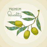Vector illustration of olive branch. Olive tree. Premium quality oil Royalty Free Stock Image