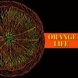 Vector Illustration of Orange Fruits. Royalty Free Stock Photo