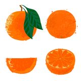 Vector illustration of orange fruits Stock Images