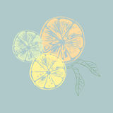 Vector illustration of orange slices with leaves Royalty Free Stock Photo
