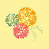 Vector illustration of orange slices with leaves Stock Images