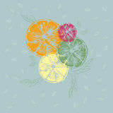 Vector illustration of orange slices with leaves Stock Photo