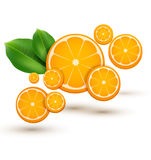 Vector illustration with oranges Royalty Free Stock Photo