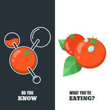 Healthy and gmo food concept. Vector illustration of organic tomatoes and tomato with pesticides and chemicals. Stock Image