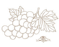 Vector illustration Outline hand drawn grape(flat style, thin li Royalty Free Stock Images