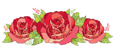 Vector illustration with outline red rose flower and green foliage isolated on white background. Floral elements with open roses. Stock Image