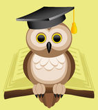 Vector illustration. Owl. Stock Image