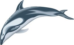 Pacific White Sided Dolphin Illustration vector illustration