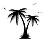 Vector illustration of palm trees . Stock Photos