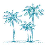 Vector illustration of palm trees. Hand drawn vector illustration of palm trees   on white background. Sketch. Retro style Royalty Free Stock Images