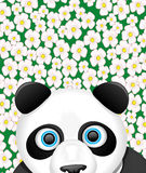 Vector illustration. Panda. Royalty Free Stock Image