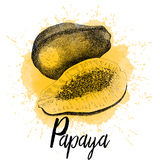 Vector illustration of papaya Royalty Free Stock Image