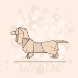 Vector illustration paper origami of dachshund. Stock Photos