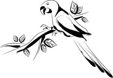 Vector illustration of parrot Stock Images