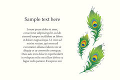 Vector illustration of peacock feather. Royalty Free Stock Photo