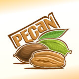 Vector illustration of pecan Royalty Free Stock Photo
