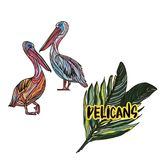 Vector illustration with pelicans. Vector illustration with pelicans on white background Stock Photography