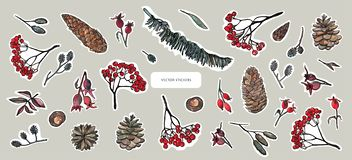Nature elements, forest treasures. Leaves, ash branches, pine cone, rose hips. Stickers design set royalty free illustration