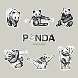 Pen style drawn vector panda bear. Stickers design. royalty free illustration