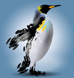 Vector illustration of a penguin Royalty Free Stock Photos