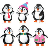 Vector Illustration Of Penguin Family Royalty Free Stock Images